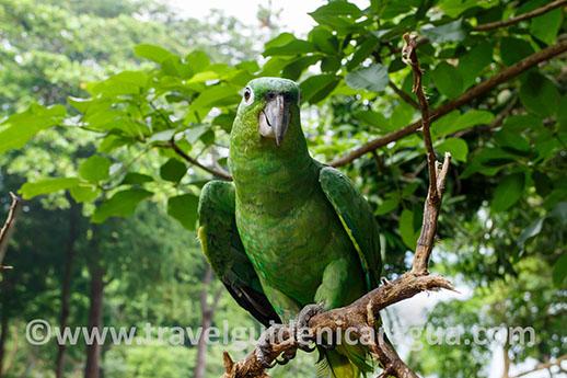 chocoyero reserve